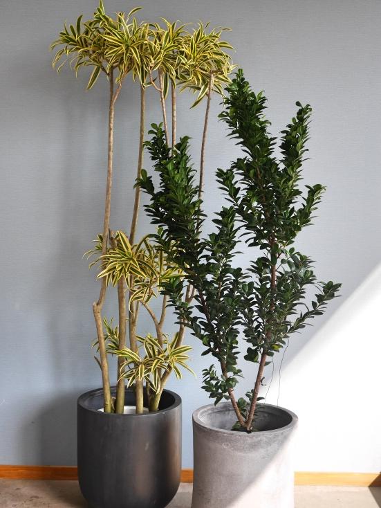 おまかせ観葉植物2L・陶器鉢カバー込み(10号鉢)