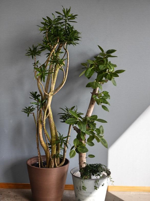 おまかせ観葉植物2L・鉢カバー込み(10号鉢)