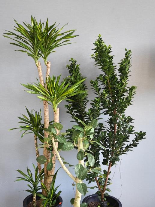 おまかせ観葉植物2L(10号鉢)