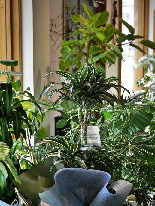 おまかせ観葉植物(オーダーメイド)