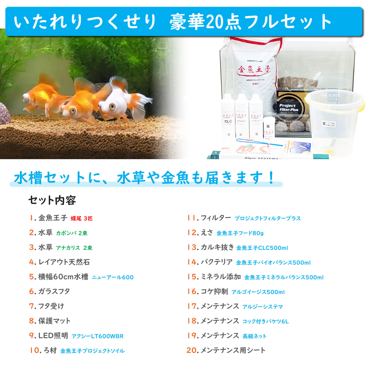 金魚王子 ホームアクアリウムオールセット 金魚:蝶尾 60cm水槽 飼育に必要なもの全てお届け 家族の団欒 インテリア 癒しに