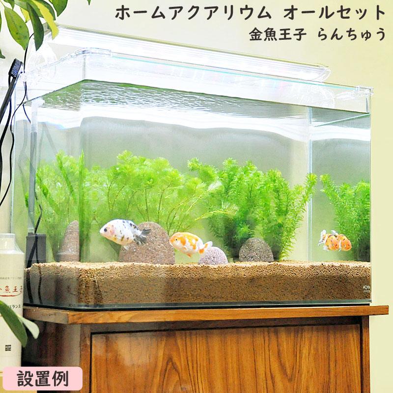 金魚王子 ホームアクアリウムオールセット 金魚:らんちゅう 60cm水槽 飼育に必要なもの全てお届け 家族の団欒 インテリア 癒しに