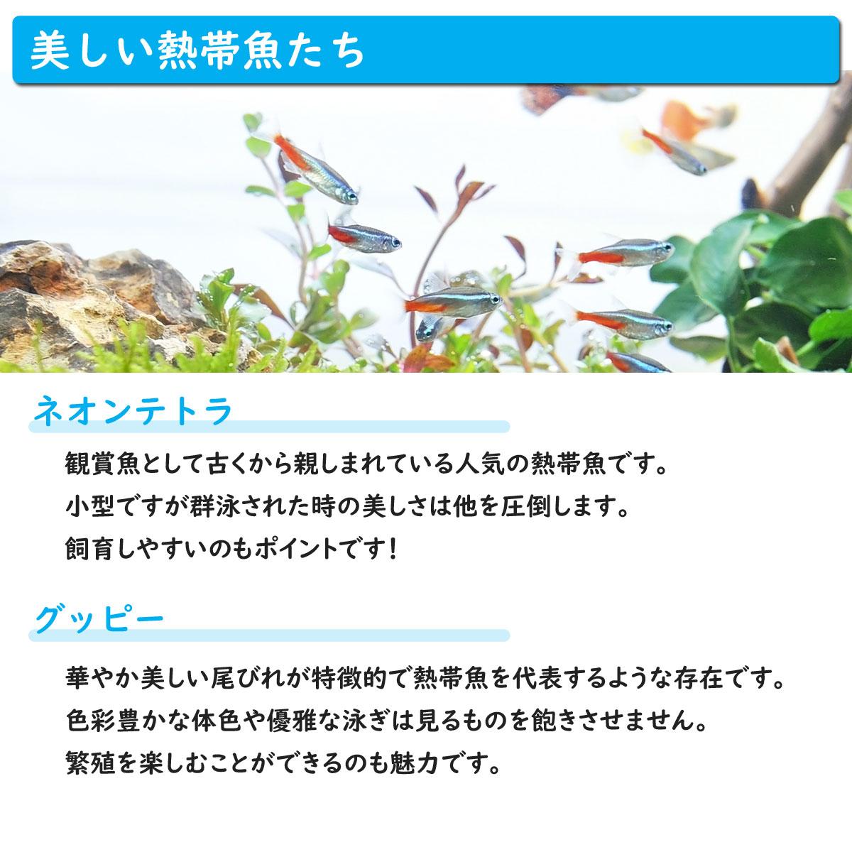ホームアクアリウムオールセット セレクト熱帯魚 36cm水槽 飼育に必要なもの全てお届け 家族の団欒 インテリア 癒しに