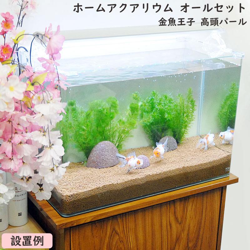 金魚王子 ホームアクアリウムオールセット 金魚:高頭パール 60cm水槽 飼育に必要なもの全てお届け 家族の団欒 インテリア 癒しに