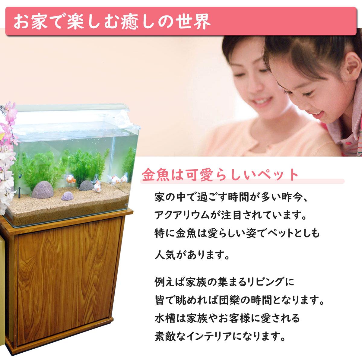 金魚王子 ホームアクアリウムオールセット 金魚:オランダ 60cm水槽 飼育に必要なもの全てお届け 家族の団欒 インテリア 癒しに
