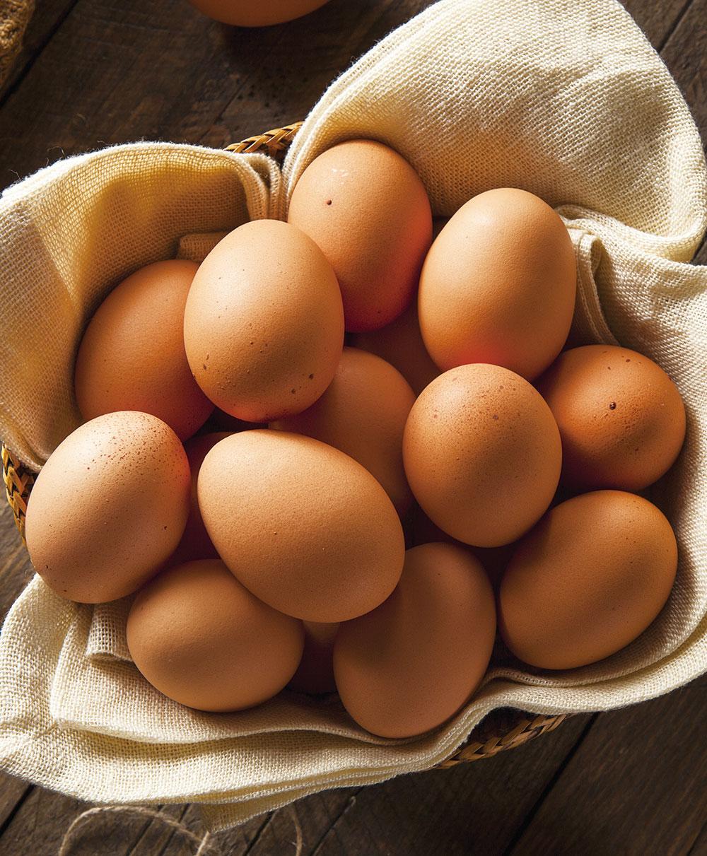 菊ちゃんの特級卵 10個×4箱   ※送料無料