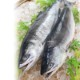 2020年新物 北海道産 時鮭姿切大 2.3kg【ネット限定】