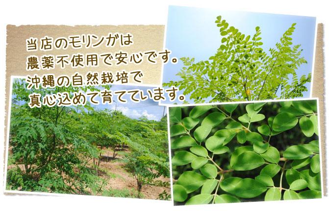 琉球新美 モリンガ粉末 60g×2個セット 沖縄産モリンガ使用