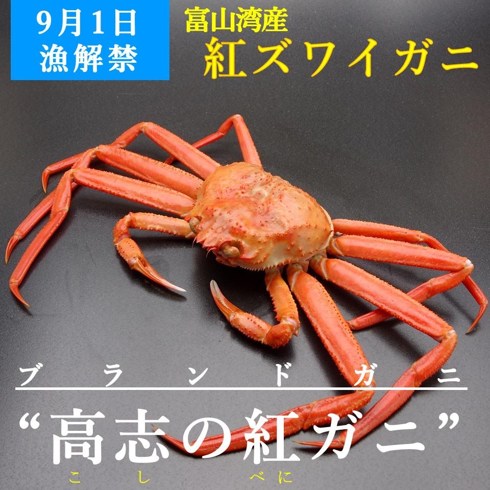 富山湾の紅ズワイガニ『高志の紅ガニ』昆布締め【Premium昆布締めシリーズ】