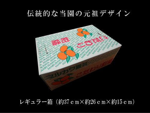 【商品番号303】珠美柑 レギュラー箱 サイズおまかせ 厳選プレミアム 約3.3kg入