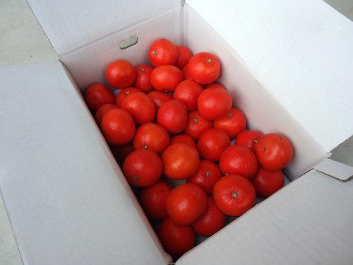 【商品番号256】紅ダイヤ レギュラー箱 中玉サイズ 秀品 約5kg入