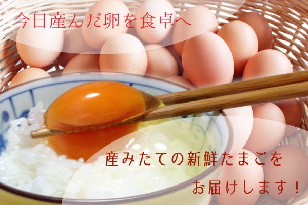 大村紅たまご 醤油付(赤卵20個・醤油1本)