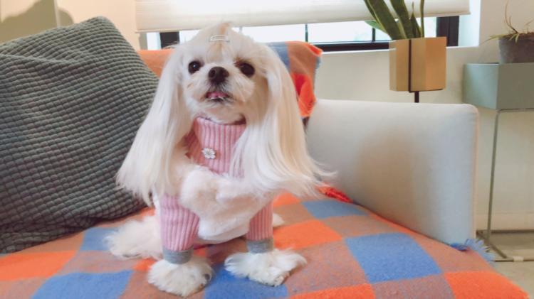 送料無料!犬の服 飾り物 かわいい デザイン多様 アクセサリー ブローチ