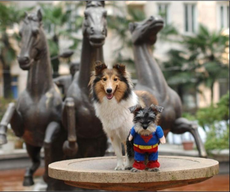 送料無料!犬服 超人気★小型犬用 ドッグウエア★スーパーマンに変身 犬 服 ペット服 ドッグウエア ペットウエア ドッグ 愛犬がスーパーマンに