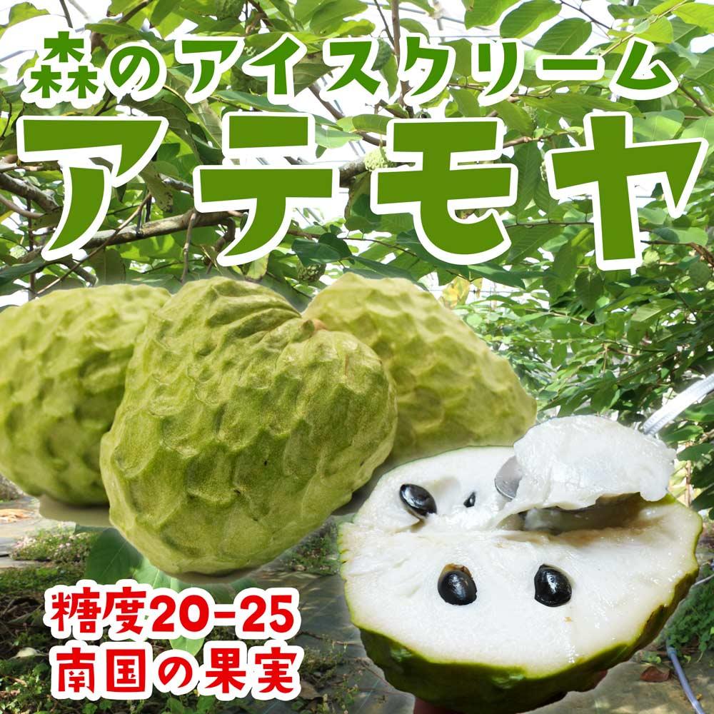 【1〜2週間前後発送予定】【 アテモヤ 】1kg  ( 贈答用箱入り ) 沖縄県恩納村の直売所 森のアイスクリーム