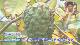 【2〜3週間後発送予定】【 アテモヤ 】1kg( 2〜8玉 袋入 ) 沖縄県恩納村の直売所 森のアイスクリーム【ATMF-1】