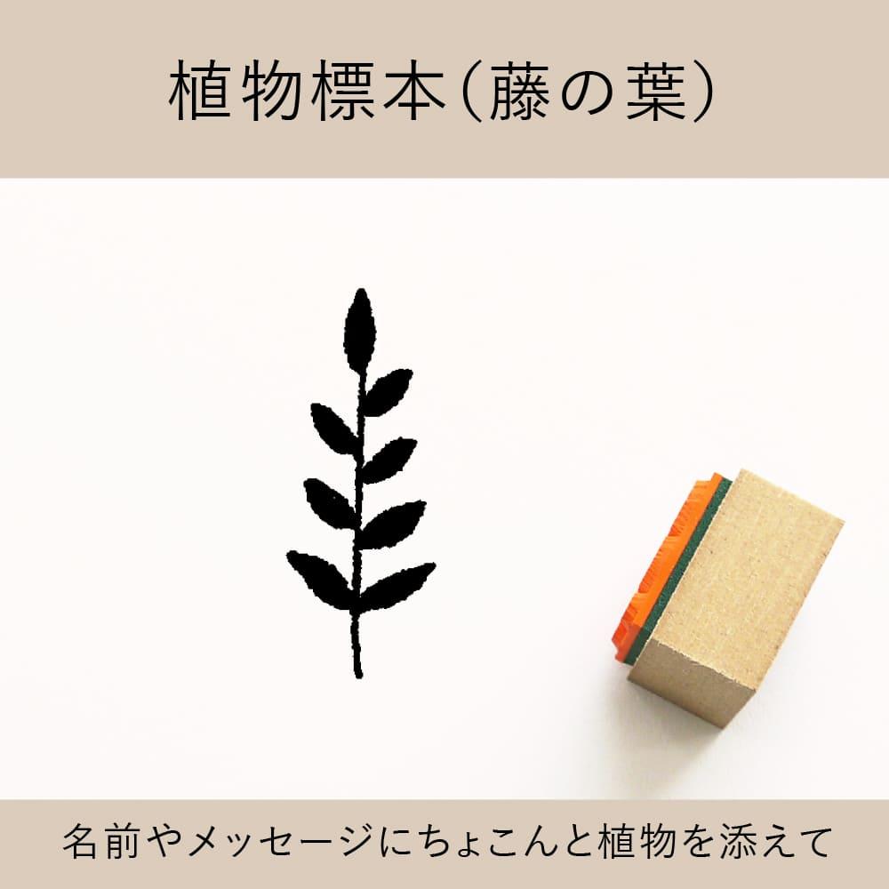 植物標本(藤の葉) ゴム印 (a-025)