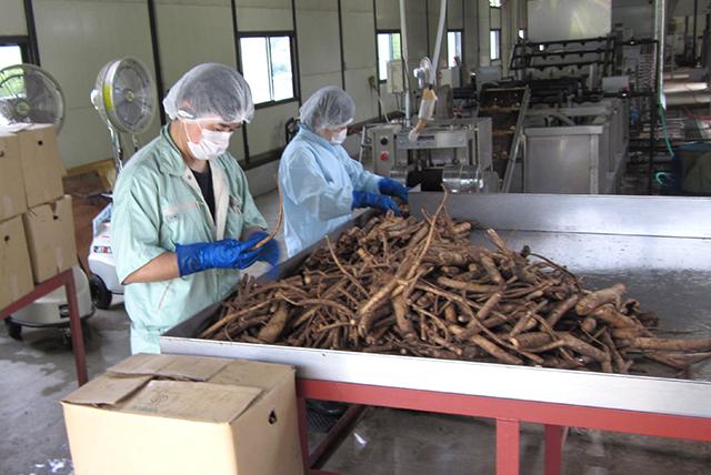 杜仲茶 国産 ティーバッグ 3g×80包 (40包x2袋セット) 遠赤焙煎 送料無料 健康茶 杜仲茶 トチュウ茶 とちゅう茶