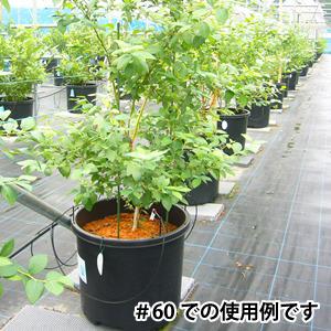 BBポット#60 (10個セット)〜果樹の苗木育成に優れた大型ポット〜