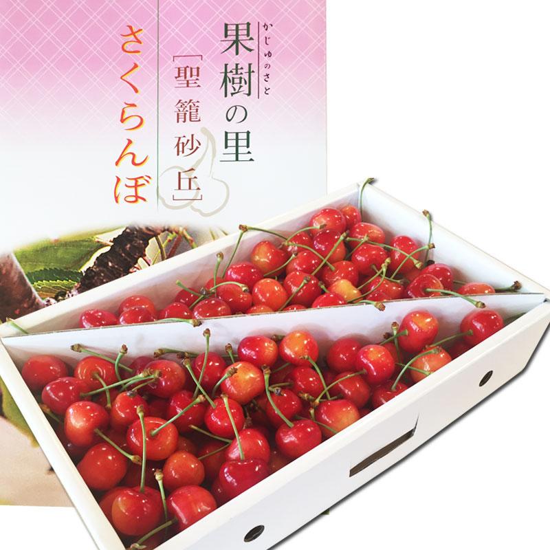 新潟市聖籠産さくらんぼ「佐藤錦」1kg【バラ詰め】※販売期間短いのでお早めに