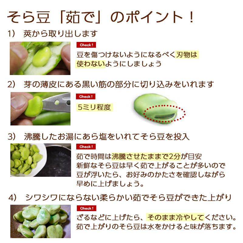 新潟産 そら豆 Lサイズ 4Kg  【2020販売期間終了】