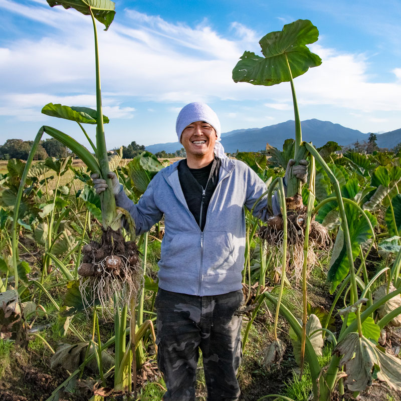 新潟 五泉産 里芋 大粒厳選 3kg さといも 帰省暮 | ピカリ産直市場お冨さん 新潟の農家さんの新鮮野菜を販売
