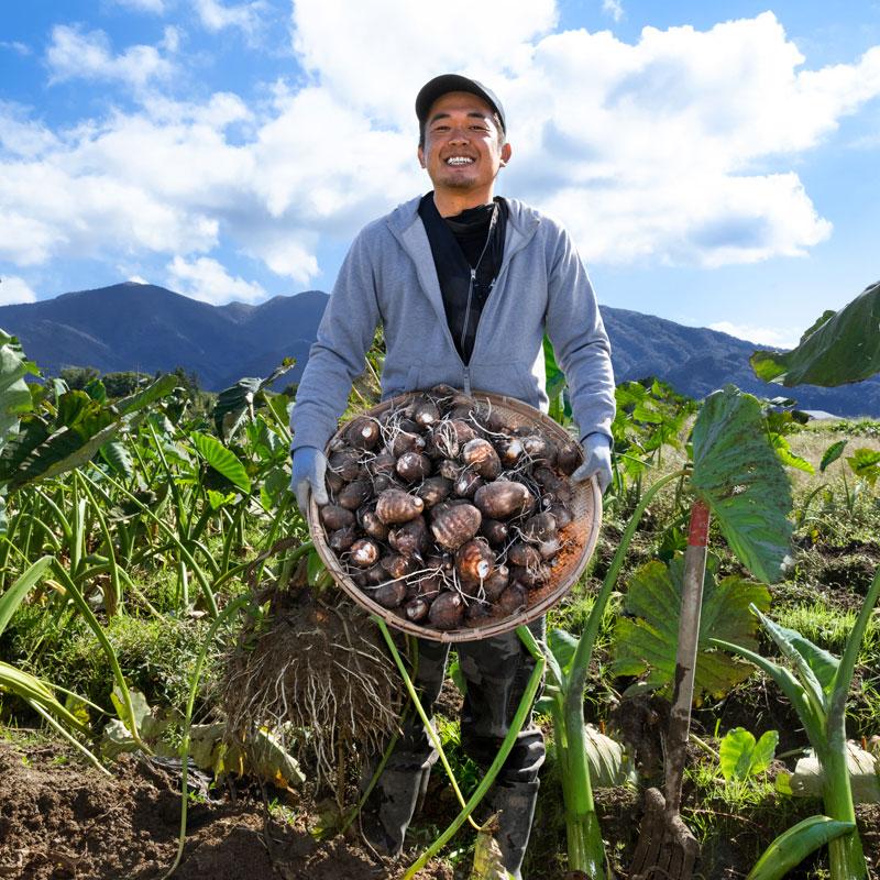 新潟 五泉産 里芋 大粒厳選 5kg さといも 帰省暮 | ピカリ産直市場お冨さん 新潟の農家さんの新鮮野菜を販売