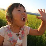 令和2年度産 佐賀県産 特別栽培米 さがびより10kgセット