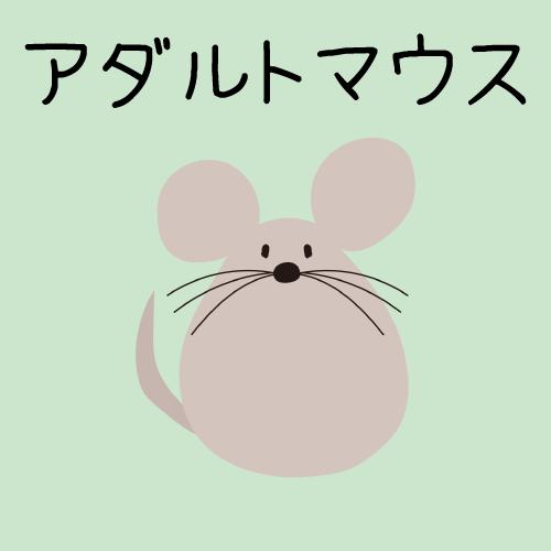 【国産】アダルトマウス 1匹