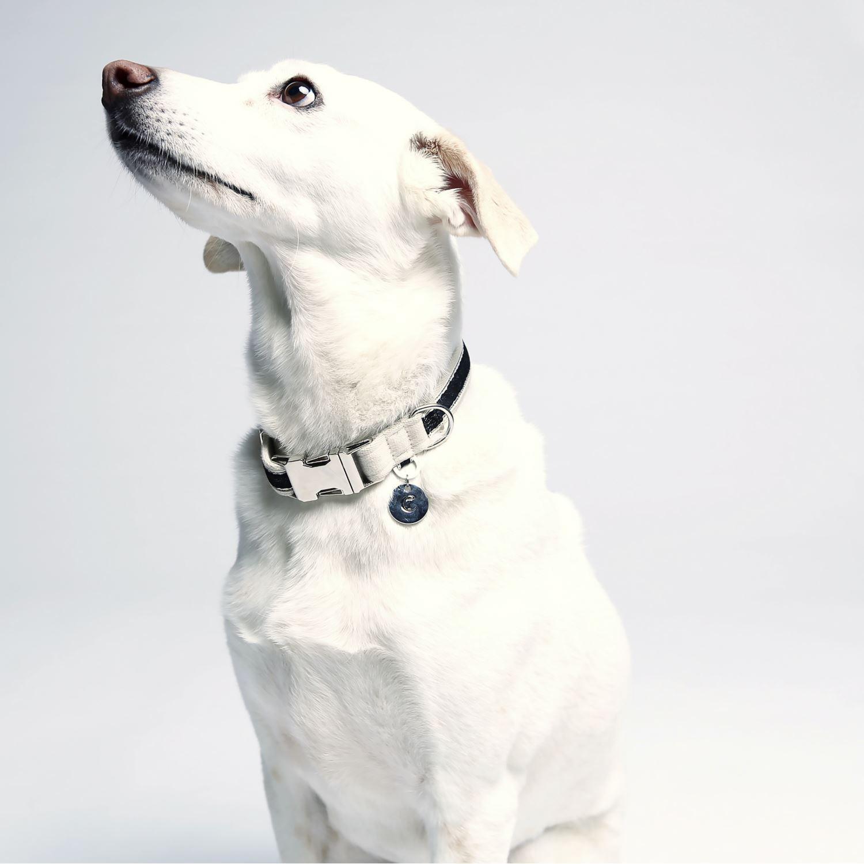 DOG COLLAR HUGO - BLACK