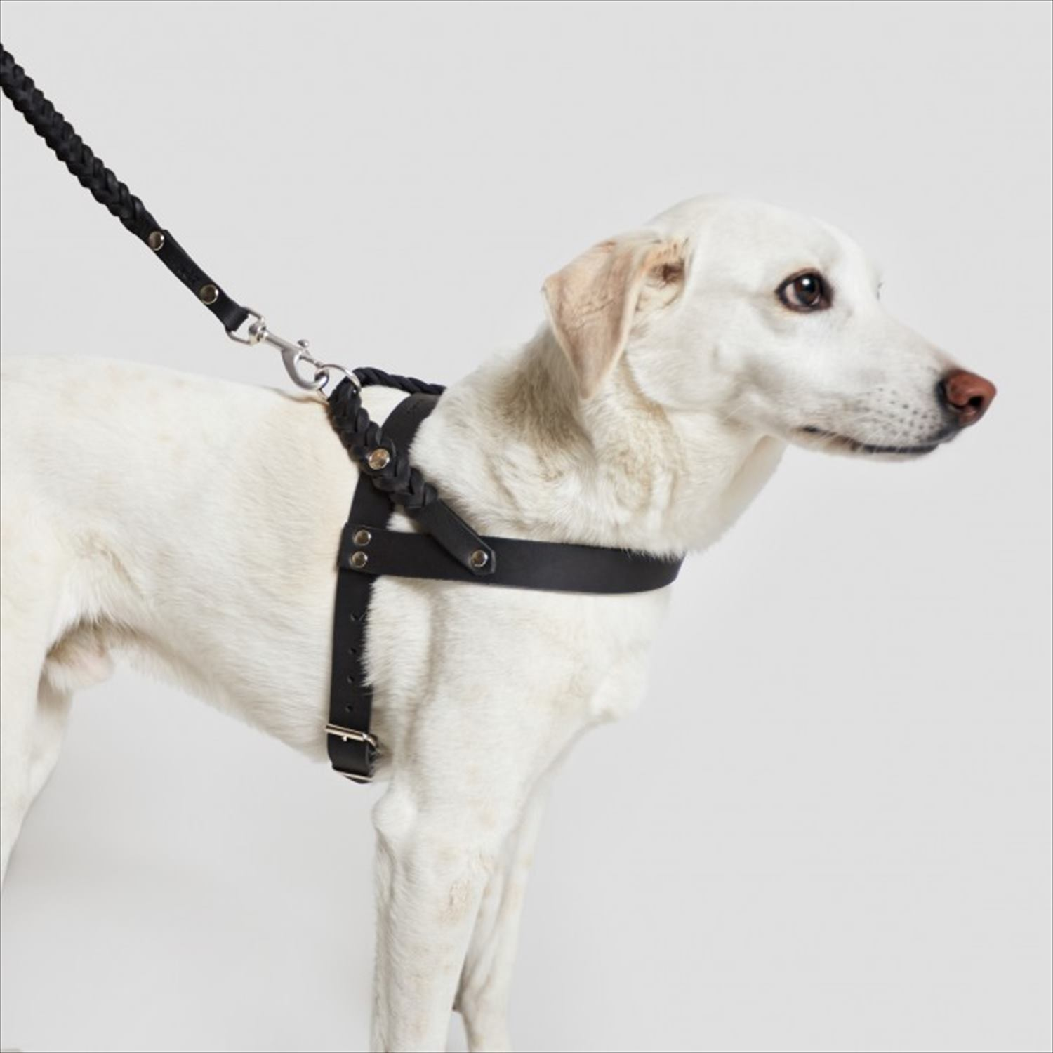 HARNESS CENTRAL PARK - BLACK