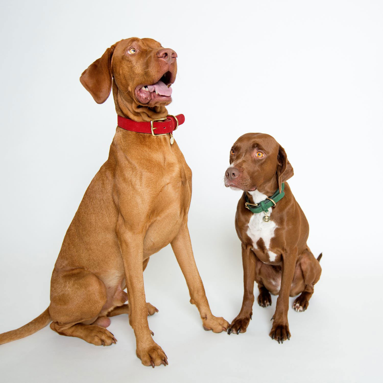 DOG COLLAR TIERGARTEN CHERRY - RED
