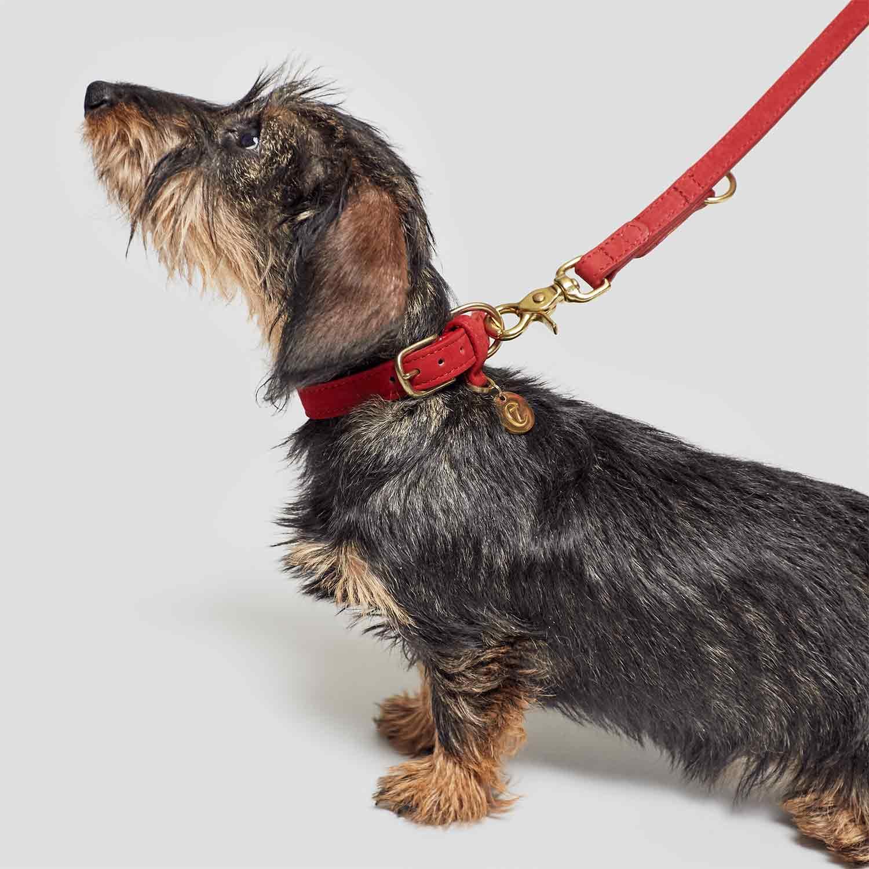 DOG LEASH TIERGARTEN CHERRY RED