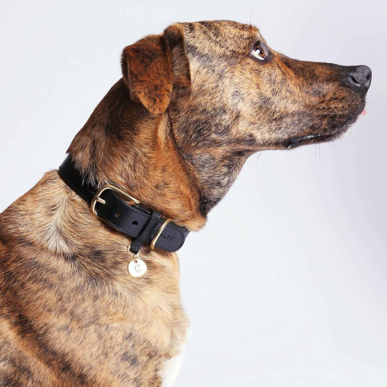 DOG COLLAR HYDE PARK - BLACK