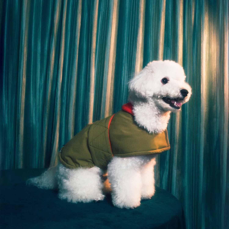 FUTON DOG COAT - KHAKI