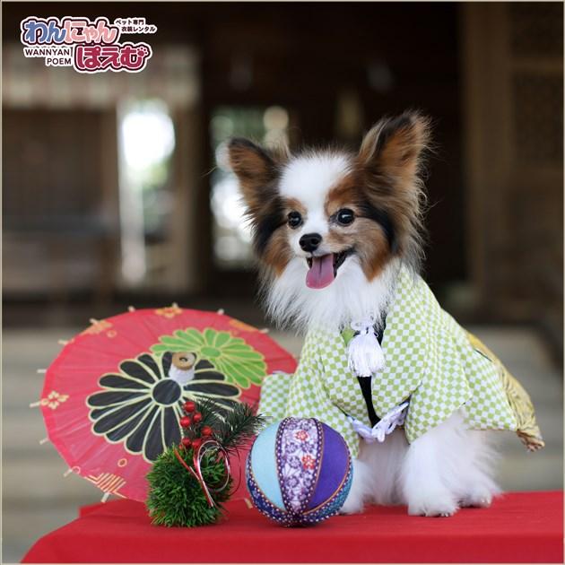 ペット着物レンタル 小型犬 男の子 ds-003 ペット衣装 Sサイズ 犬の着物 わんこ 高級生地 かわいい 結婚式 七五三 年賀状 撮影会 かっこいい「緑ちりめん市松に金ゼブラ袴」