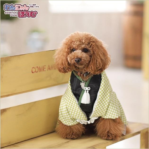 ペット着物レンタル 男の子 dm-003 ペット衣装 Mサイズ 犬の着物 わんこ 高級生地 かわいい 結婚式 七五三 年賀状 撮影会 かっこいい 「緑市松模様に銀ゼブラ袴」