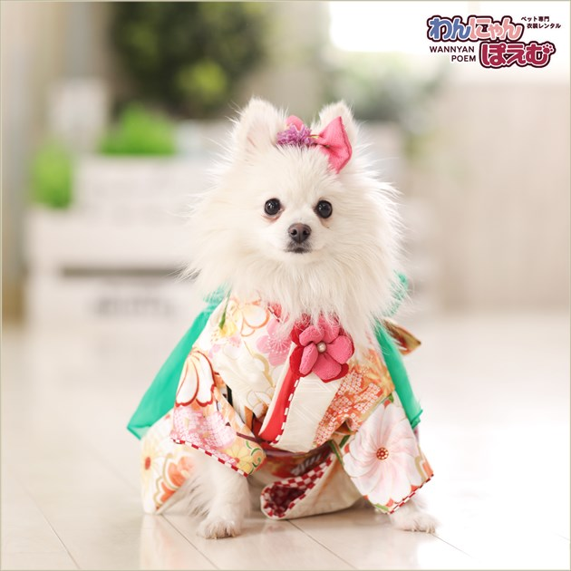 犬 ペット 着物レンタル 女の子 わんこ 小型犬 ksr-005 ペット衣装 犬の着物 動物衣装 七五三 結婚式 高級生地 かわいい フォトブック 動画 プレゼント「白地に吉祥縁起鶴と絢爛慶華帯」