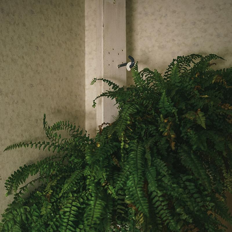 SCREW IN PLANT HOOKS
