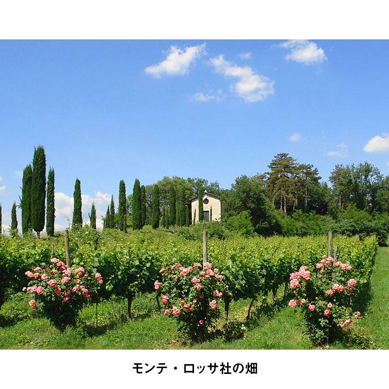 【限定46%OFF】夏と言えばブラン・ド・ブラン!フランチャコルタと泡・白多めで夏全開の7月のワインセット【送料無料】