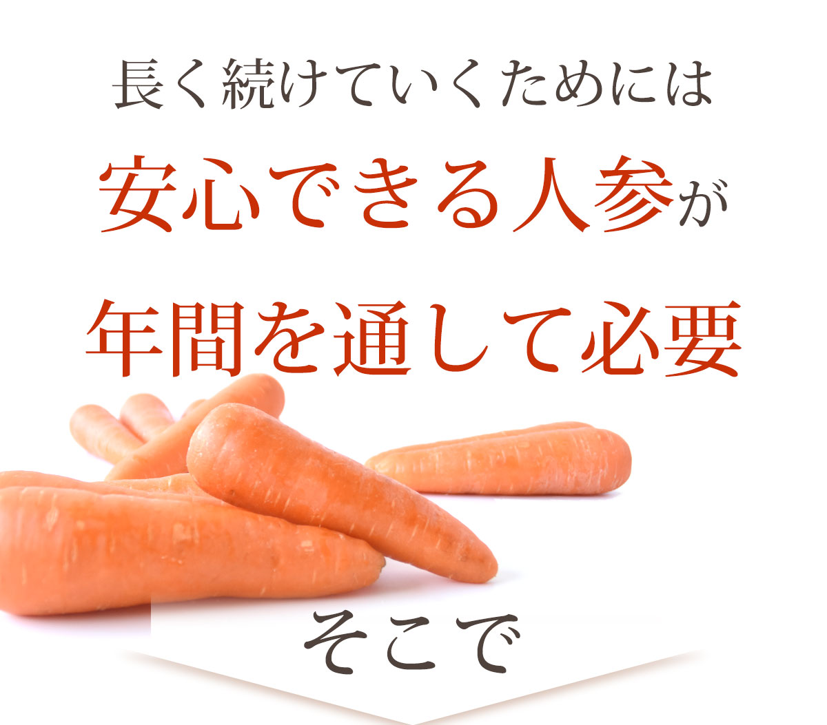 訳あり にんじん 10kg 農薬・化学肥料不使用 人参