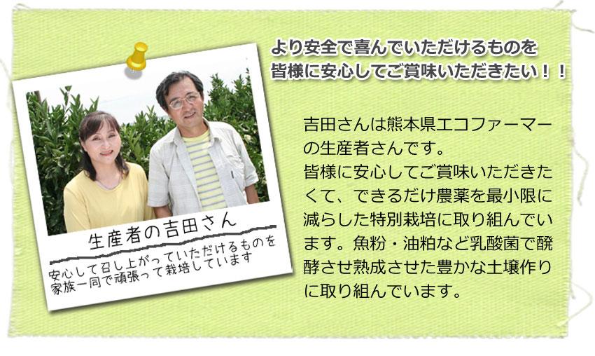 熊本県産 スキッとレモン 2kg 【特別栽培】【国産レモン】