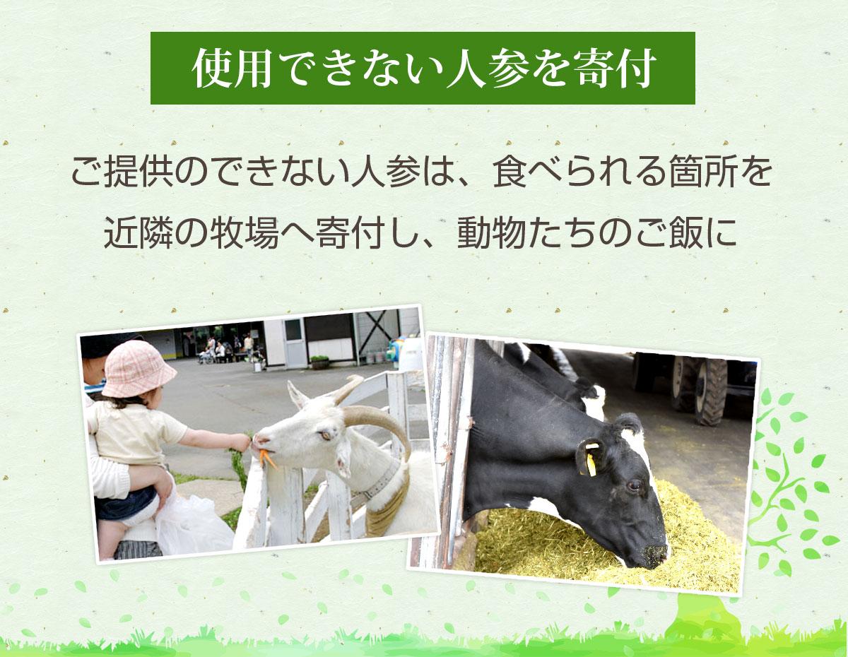 無農薬にんじん 6kg 【送料無料】 【訳あり】 【無農薬栽培】 【にんじんジュース】