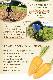 ピュアキャロップル ゴールド 180ml×20本 (常温ピカベジジュース)送料無料 ストレートジュース 金美人参ジュース 野菜ジュース ミックスジュース 無添加 ゲルソン療法 無農薬人参