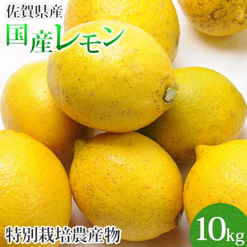 佐賀県産 レモン 10kg 国産 特別栽培農産物 マイヤーレモン 送料無料