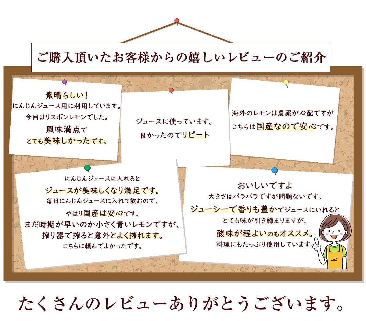 佐賀県産 レモン 3kg 国産 特別栽培農産物 マイヤーレモン