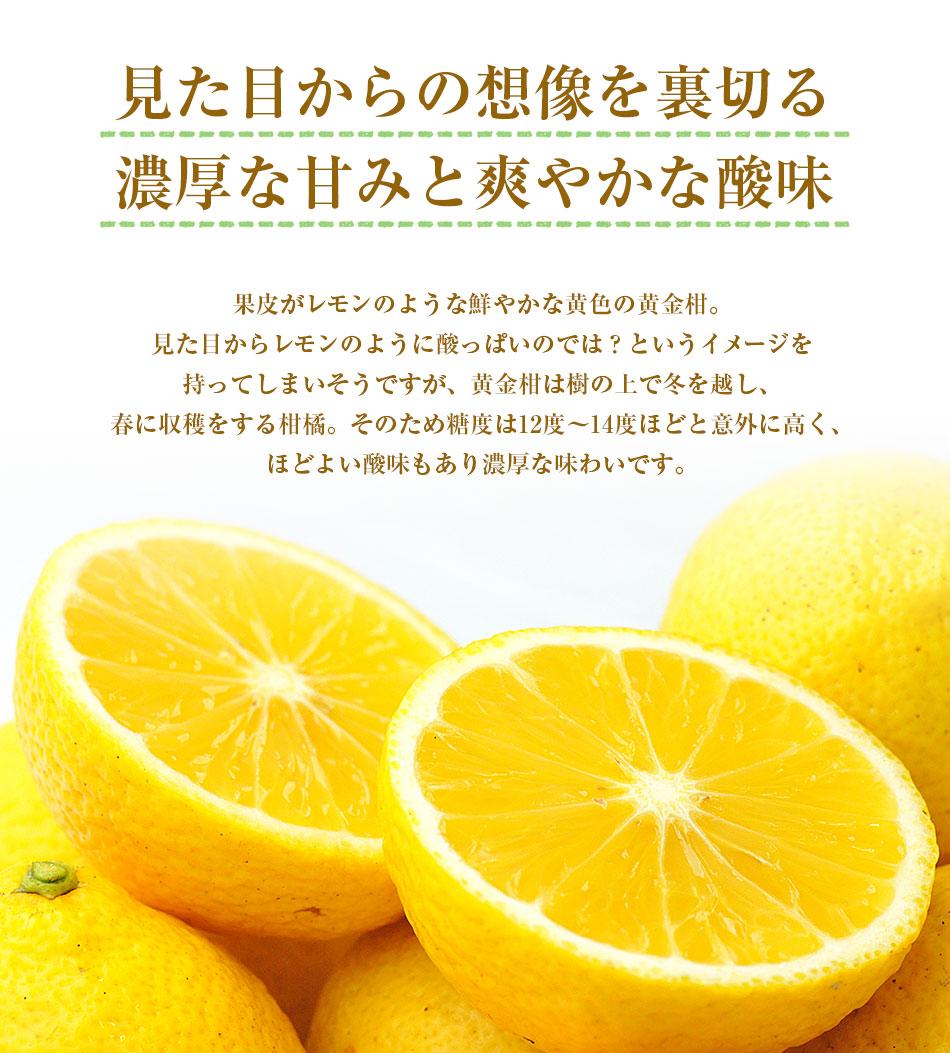 黄金柑(おうごんかん)1kg 【静岡県産】 【特別栽培農産物】