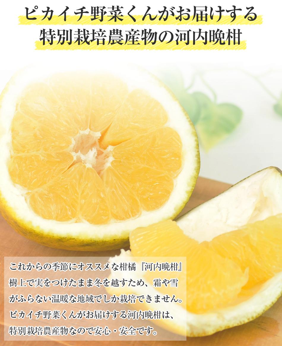 河内晩柑5kg【特別栽培農産物】【熊本県産】【美生柑】【人参ジュース】
