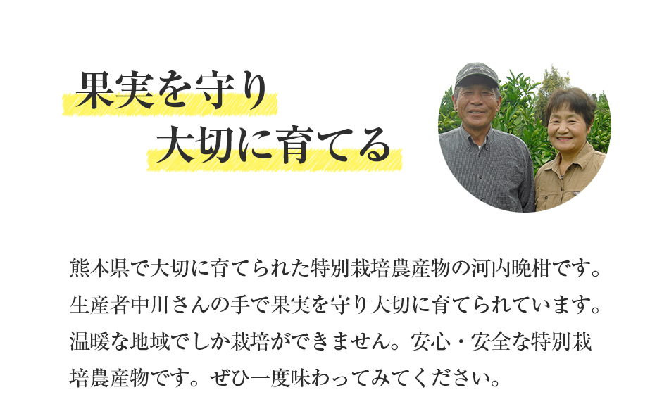 河内晩柑10kg【特別栽培農産物】【熊本県産】【美生柑】【人参ジュース】【送料無料】