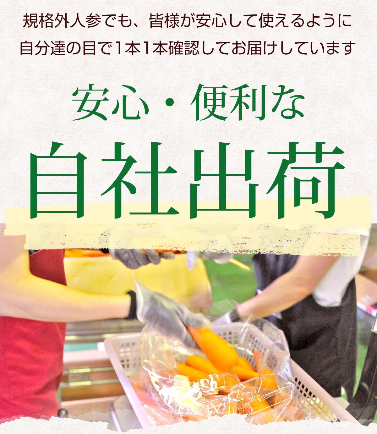 無農薬にんじん 7kg 【送料無料】 【訳あり】 【無農薬栽培】 【にんじんジュース】